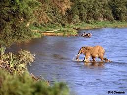 Gestion durable, participative et intégrée des aires protégées, des territoires périphériques du Parc national de la Comoé en Côte d'Ivoire (PAPBio RCI)