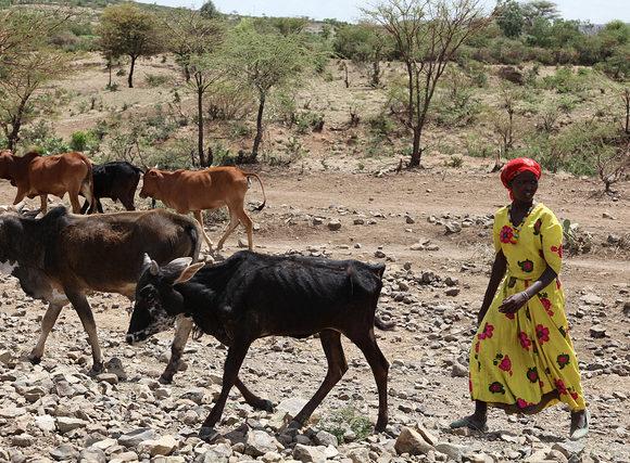Projet d'appui à la mobilité du bétail pour un meilleur accès aux ressources et aux marchés (PAMOBARMA)