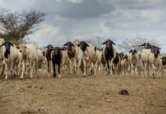 Projet Élevages et Pastoralisme Intégrés et Sécurisés en Afrique de l'Ouest (PEPISAO)