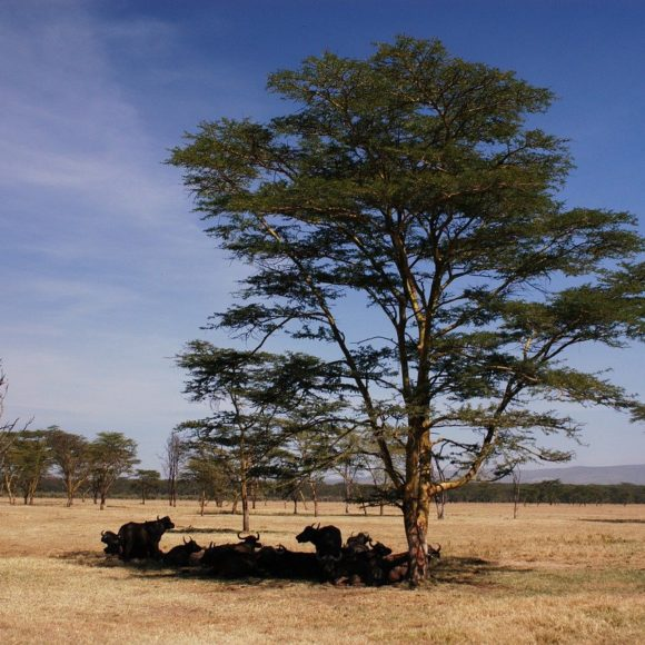 Projet de Gestion Intercommunale de l'Environnement pour l'adaptation agro-sylvo-pastorale au changement climatique (GITE)